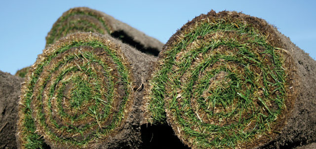 How much turf do you need?
