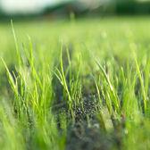 Lawn Care: Winter Lawn Care
