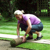 Info Centre: Laying Turf in Winter